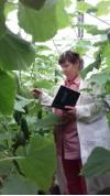 Апробация овощных культур 68478