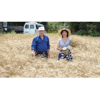Апробация озимой пшеницы a89a2