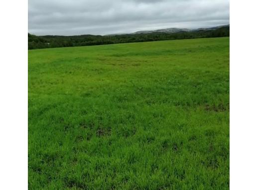 Всходы однолетних трав в Кольском районе 04.07 c3e0e