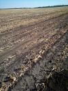 Кукуруза 14.09.2021 2 2b759