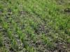 Озимые зерновые ee02f