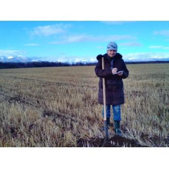Осенние почвенные раскопки 231da