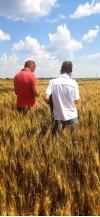 Осмотр семенных посевов 91596