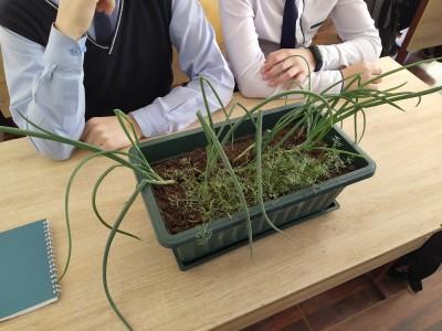 РСЦ 06 школьный урожай b4d8a