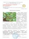 Сигнализационное сообщение 9 фитофтороз на картофеле bf17d