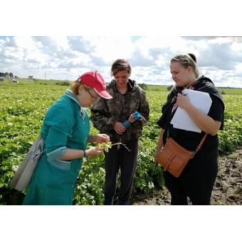 Фитосанитарный мониторинг на посадках картофеля Вологодский район 7c895