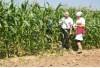 дем посевы кукурузы 23319