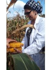 кукуруза cae9c