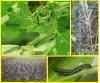 лаговой мотылёк гусеницы 0dfbc