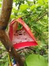 ловушка для яблонной плодожерки 5 ef345