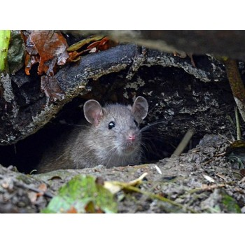 мышка на сайт 6dac4