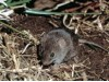 мышь 768fc