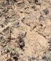 нестадные саранчевые 29141