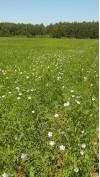посевы льна a1bc3