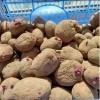 семена картофеля 668fc