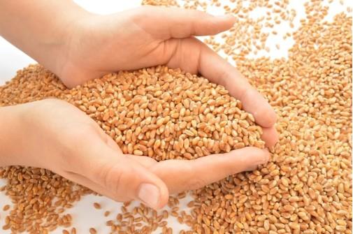 семена 41027
