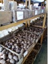 семенной картофель в яровизаторе ПОС апрель 16a0b