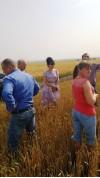 семхоз БашмаковСА2 поле
