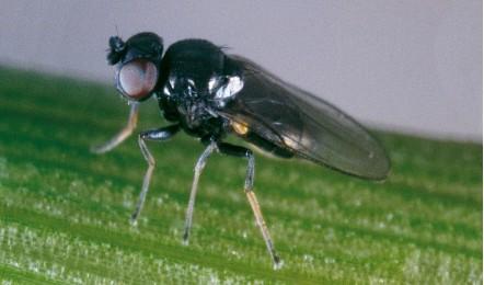 шведская муха 1ed4a