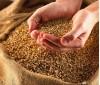21 февраля на сайт семена 31b9f