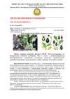2 Сигнализационное сообщение по крестоцветной блошке от РСХЦ min 1 page 0001 min e158e