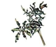 Закручивание листьев