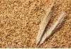 Wheat 600f8
