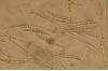 target fusarium head blight 05 fusarium graminearum 758af