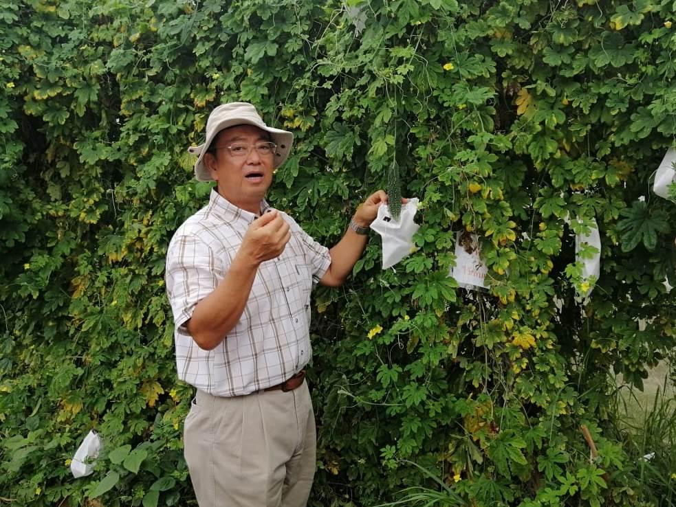 органическое земледелие Япония