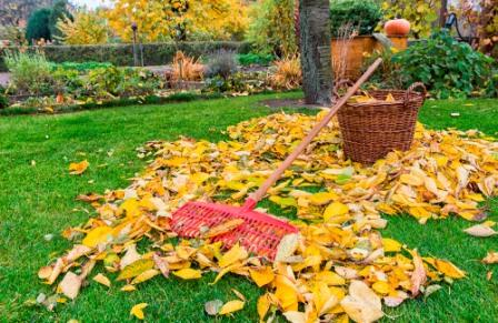 сад осенний листья грабли